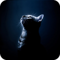 Black Cat Theme C Launcher