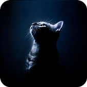 Black Cat Theme C Launcher icon