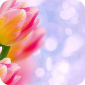 Pink tulip Theme C Launcher icon