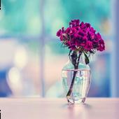 purple-Carnations icon