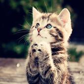 Cute Cat Theme C Launcher icon