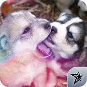 Cute Puppy Pictures icon