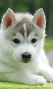 Cute Puppy Pictures poster