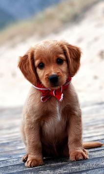 Cute Puppy Pictures apk screenshot