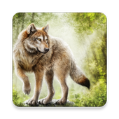 1000 Wolf Wallpapers icon