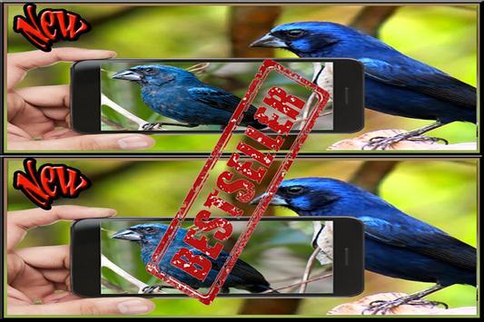 Cantos do Passaro Azulao Novo screenshot 2