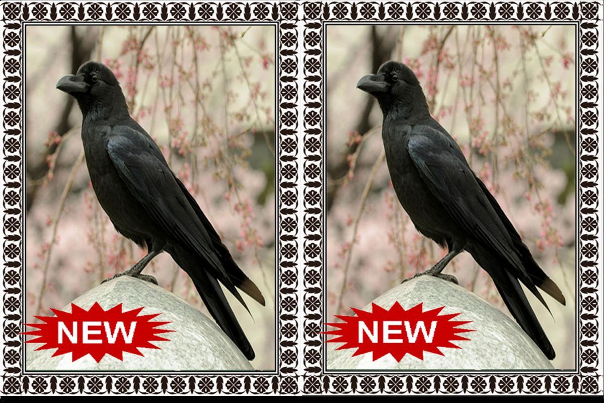 Suara Burung Gagak Terbaru Mp3 For Android Apk Download