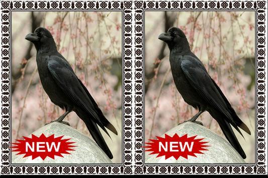 Suara Burung Gagak Terbaru Mp3 apk screenshot