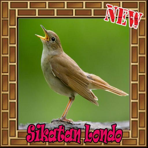 Suara Burung Sikatan Londo Terbaik Mp3 For Android Apk Download