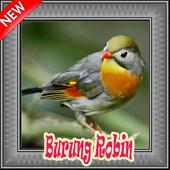 Burung Robin Terbaik Mp3 icon
