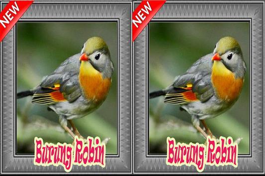 Burung Robin Terbaik Mp3 apk screenshot