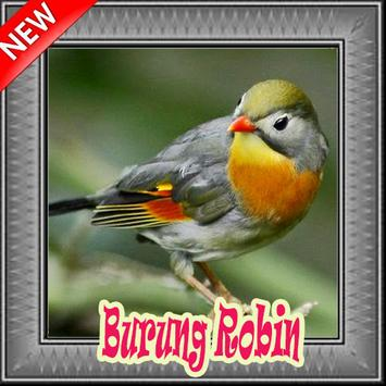 Burung Robin Terbaik Mp3 poster