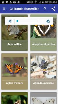 California Butterflies apk screenshot