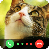 Call From Cat icon