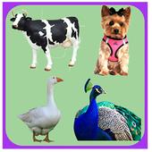 Animal Sounds Quiz icon
