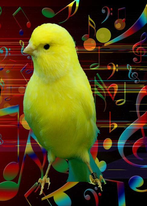 صوت الكناري أجمل طائر For Android Apk Download