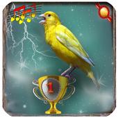 canary singing master icon