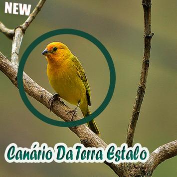 Canário Da Terra Estalo Mp3 poster