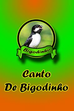 Canto De Bigodinho apk screenshot