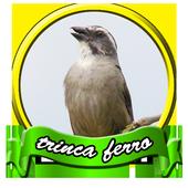 100+ Canto De Trinca Ferro icon