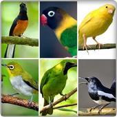 canto dos pássaros icon