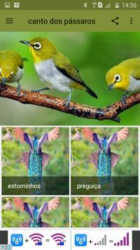 canto dos pássaros poster