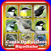 Canto de Bigodinho New Mp3 icon