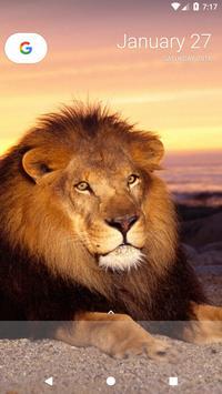 Lion Wallpapers screenshot 6