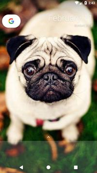 Pug Wallpaper screenshot 3