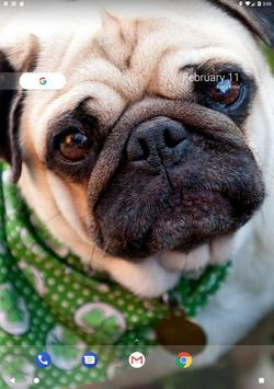 Pug Wallpaper screenshot 14