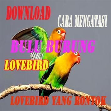 Cara Mengatasi Bulu Burung Lovebird yang Rontok poster