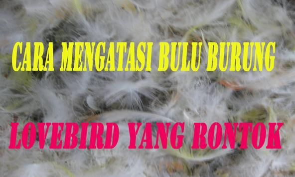 Cara Mengatasi Bulu Burung Lovebird yang Rontok screenshot 1