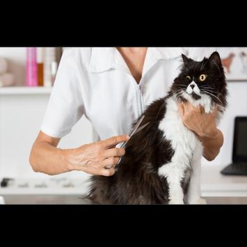 Cara Merawat Kucing Terbaru screenshot 2