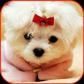 Puppy lock screen icon