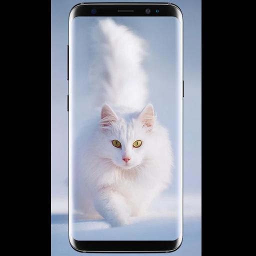 Cute Cat Wallpaper Hd For Android Apk Download