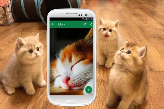 Cat Wallpapers screenshot 1