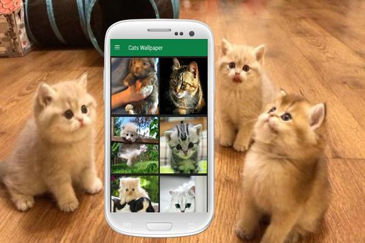 Cat Wallpapers screenshot 3