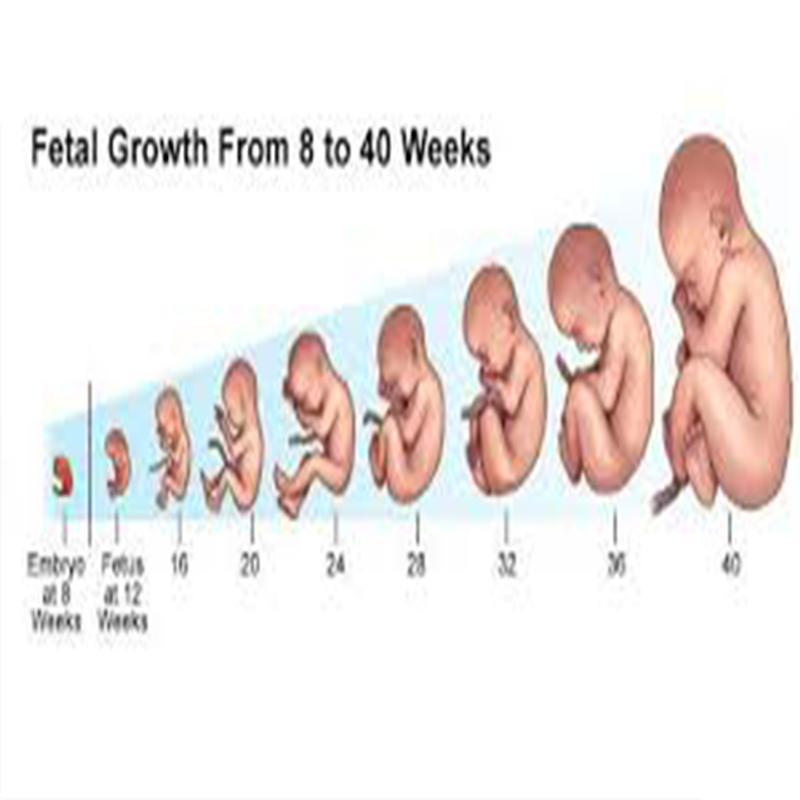 Descargar Video De Etapas Del Embarazo Por Meses