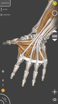 Anatomia 3D para artistas imagem de tela 16
