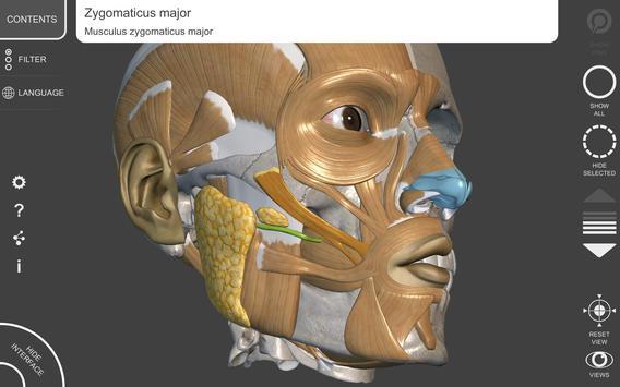 Anatomía 3D para el artista Descarga APK - Gratis Educación ...