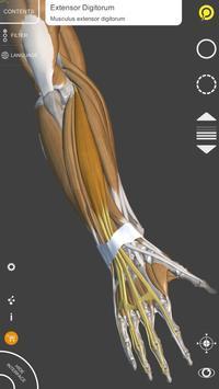 Anatomia 3D para artistas imagem de tela 5