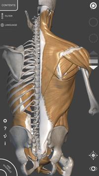 Anatomia 3D para artistas imagem de tela 6