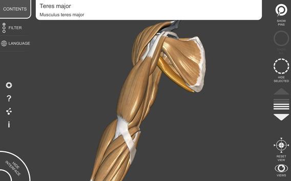 Anatomia 3D para artistas imagem de tela 8