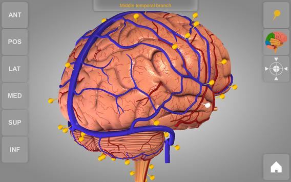 Brain 3D Anatomy Lite APK Download - Free Medical APP for Android ...