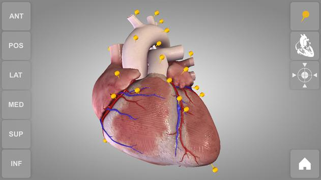 Heart 3d Anatomy Lite Apk Download Free Medical App For Android