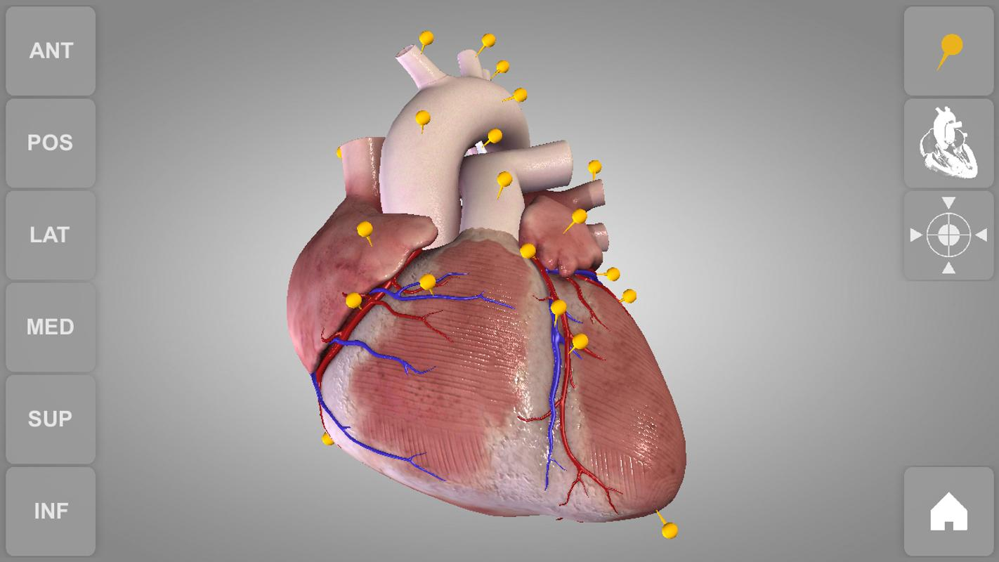 Heart 3D Anatomy Lite APK Download - Free Medical APP for Android ...