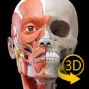Muscle | Skeleton - 3D Atlas of Anatomy APK