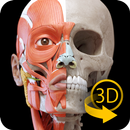 Muscle | Skeleton - 3D Atlas of Anatomy APK