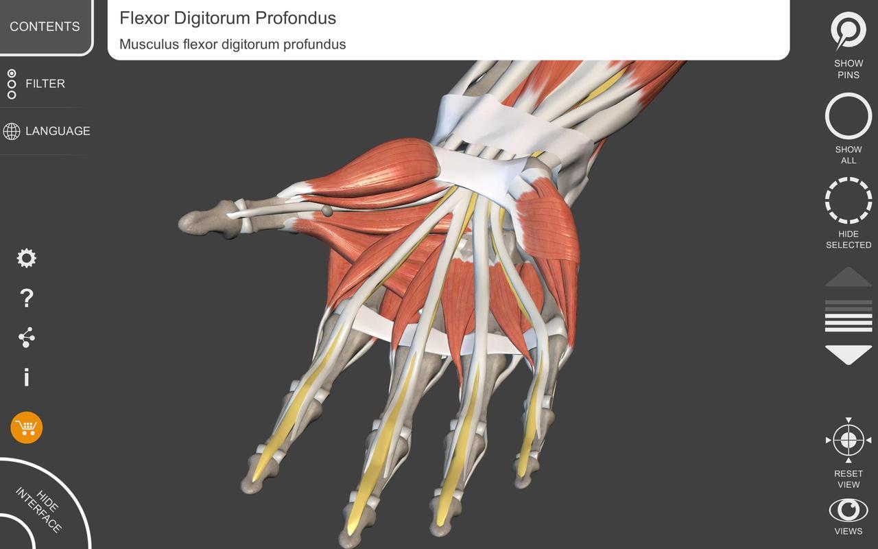 Músculos | Esqueleto - Atlas de Anatomia em 3D APK Baixar - Grátis ...