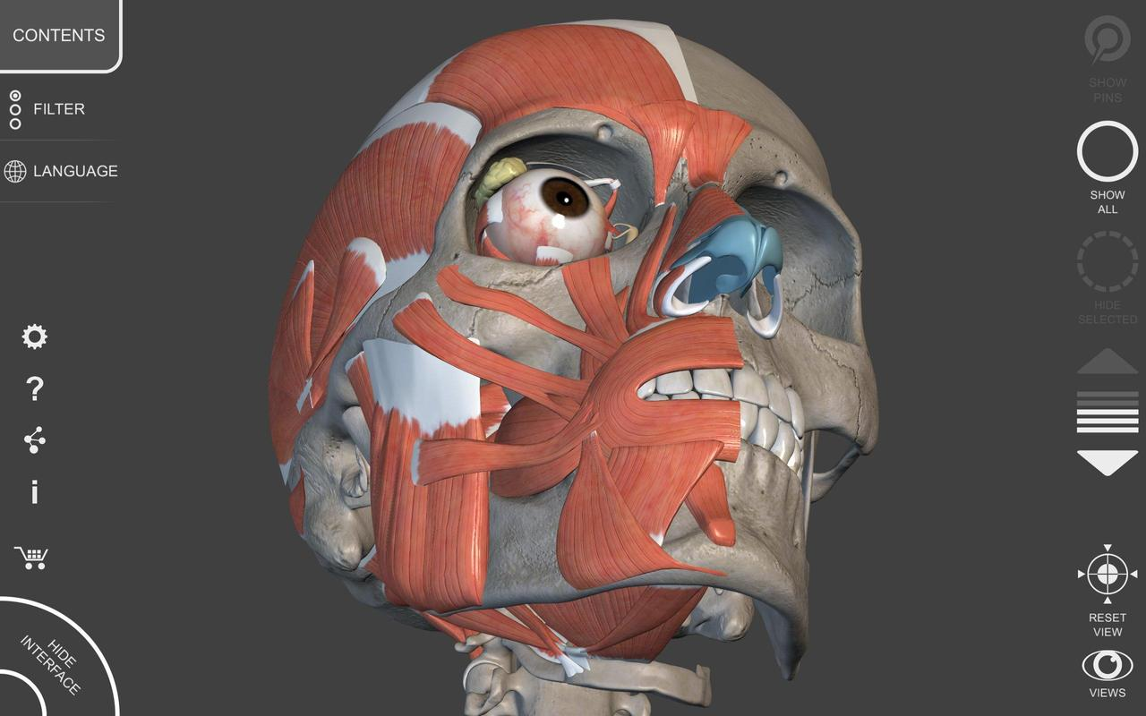 Muscle Skeleton 3d Atlas Of Anatomy For Android Apk Download